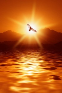 Sunset Eagle