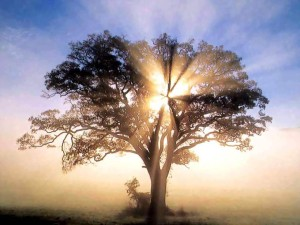 oaktree-new-england-sunrise-wallpapers-free-org