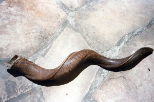 Long_Shofar2