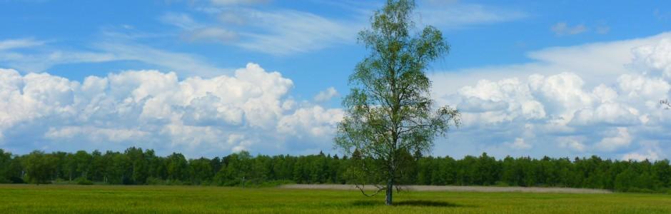 tree-7835-940x300