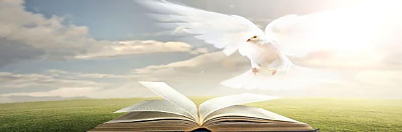 Dove book